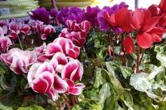 Foto-Abbracciavento-Fiore-dopo-fiore-10-2