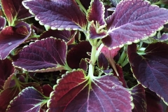Foto-Abbracciavento-Fiore-dopo-fiore-11-2