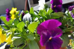 Foto-Abbracciavento-Fiore-dopo-fiore-12-2