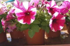 Foto-Abbracciavento-Fiore-dopo-fiore-13-2