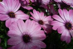Foto-Abbracciavento-Fiore-dopo-fiore-2-2