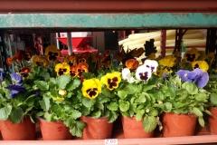 Foto-Abbracciavento-Fiore-dopo-fiore-21-2