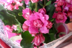 Foto-Abbracciavento-Fiore-dopo-fiore-24-2