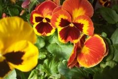 Foto-Abbracciavento-Fiore-dopo-fiore-26-2
