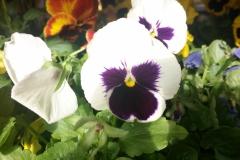 Foto-Abbracciavento-Fiore-dopo-fiore-28-2