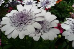 Foto-Abbracciavento-Fiore-dopo-fiore-3-2