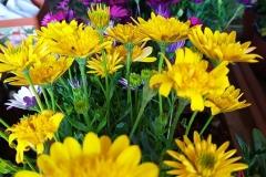 Foto-Abbracciavento-Fiore-dopo-fiore-36-2