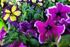 Foto-Abbracciavento-Fiore-dopo-fiore-37-2