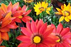 Foto-Abbracciavento-Fiore-dopo-fiore-38-2