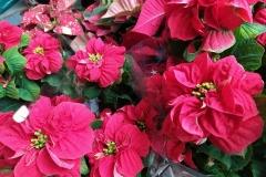 Foto-Abbracciavento-Fiore-dopo-fiore-41-2