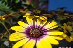 Foto-Abbracciavento-Fiore-dopo-fiore-42-2