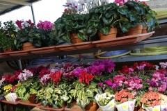 Foto-Abbracciavento-Fiore-dopo-fiore-8-2